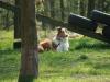 2008-04-27-pruefung-hfs-7