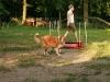 2008-06-02 - HS Bruns, Agility