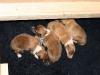 2009-11-28 - A-Wurf, 1.Tag (1)