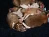 2009-11-28 - A-Wurf, 1.Tag