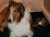 2009-11-28 - A-Wurf, 1.Tag  (19)