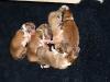 2009-11-28 - A-Wurf, 1.Tag  (9)