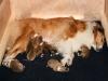 2009-11-30 - A-Wurf, 4. Tag (1)