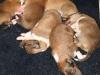 2009-11-30 - A-Wurf, 4. Tag (10)
