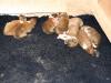 2009-11-30 - A-Wurf, 4. Tag (12)