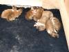 2009-11-30 - A-Wurf, 4. Tag (13)