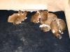 2009-11-30 - A-Wurf, 4. Tag (7)