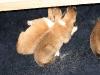 2009-11-30 - A-Wurf, 4. Tag (9)