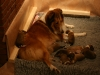 2009-12-06-A-Wurf, 9.Tag (1)