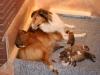 2009-12-06 - A-Wurf, 9. Tag