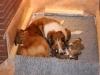 2009-12-06-A-Wurf, 9.Tag (3)