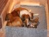 2009-12-06-A-Wurf, 9.Tag (4)