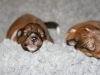 2009-12-07 - A-Wurf, 10. Tag (1)