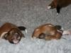 2009-12-07 - A-Wurf, 10. Tag (2)