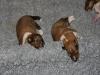 2009-12-07 - A-Wurf, 10. Tag (3)
