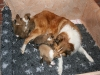 2009-12-14 - A-Wurf, 18 Tag (12)