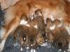 2009-12-14 - A-Wurf, 18 Tag (16)