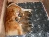 2009-12-14 - A-Wurf, 18 Tag (18)