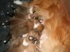 2009-12-14 - A-Wurf, 18 Tag (24)