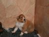 2009-12-14 - A-Wurf, 18 Tag (33)