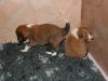 2009-12-14 - A-Wurf, 18 Tag (38)