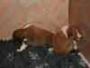 2009-12-14 - A-Wurf, 18 Tag (39)