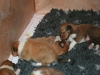 2009-12-14 - A-Wurf, 18 Tag (41)
