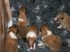 2009-12-14 - A-Wurf, 18 Tag (7)