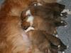 2009-12-17 - A-Wurf; 21. Tag (10)