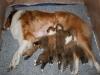 2009-12-17 - A-Wurf; 21. Tag (11)