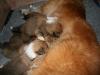 2009-12-17 - A-Wurf; 21. Tag (19)