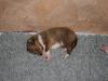 2009-12-17 - A-Wurf; 21. Tag (2)