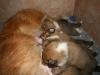2009-12-17 - A-Wurf; 21. Tag (20)