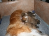 2009-12-17 - A-Wurf; 21. Tag (22)