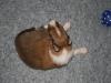 2009-12-17 - A-Wurf; 21. Tag (5)