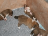 2009-12-17 - A-Wurf; 21. Tag (6)