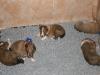 2009-12-17 - A-Wurf; 21. Tag (8)