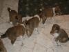 2009-12-24 - Heiligabend - 4