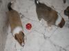 2009-12-24 - Heiligabend - 5