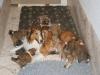 2009-12-25 - A-Wurf, 29. Tag (10)