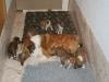 2009-12-25 - A-Wurf, 29. Tag (15)