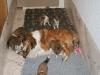2009-12-25 - A-Wurf, 29. Tag (16)
