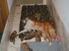 2009-12-25 - A-Wurf, 29. Tag (24)