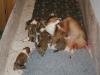 2009-12-25 - A-Wurf, 29. Tag (3)