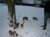 2009-12-30 - Schneeausflug, 34. Tag - 13