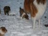 2009-12-30 - Schneeausflug, 34. Tag - 15