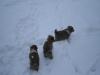 2010-01-02 - A-Wurf, 37.Tag - 16