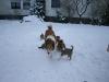 2010-01-02 - A-Wurf, 37.Tag - 20