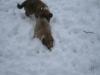 2010-01-02 - A-Wurf, 37.Tag - 23