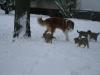 2010-01-02 - A-Wurf, 37.Tag - 33